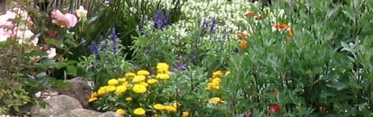 San Diego Landscape Garden